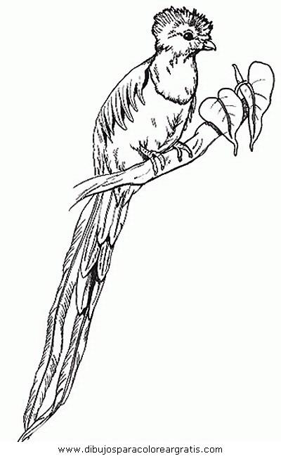 animales/pajaros/uccelli_282.JPG