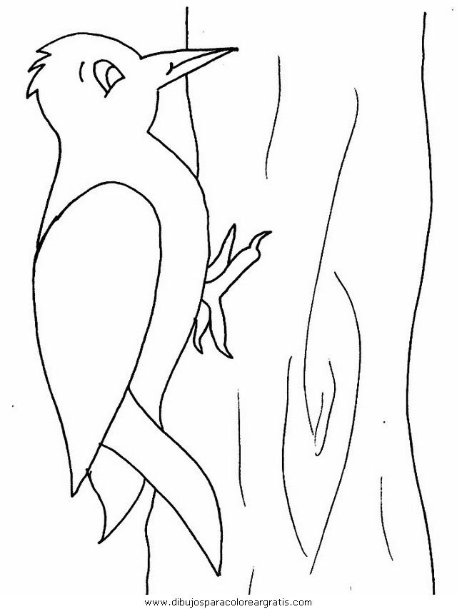 animales/pajaros/woodpecker.JPG