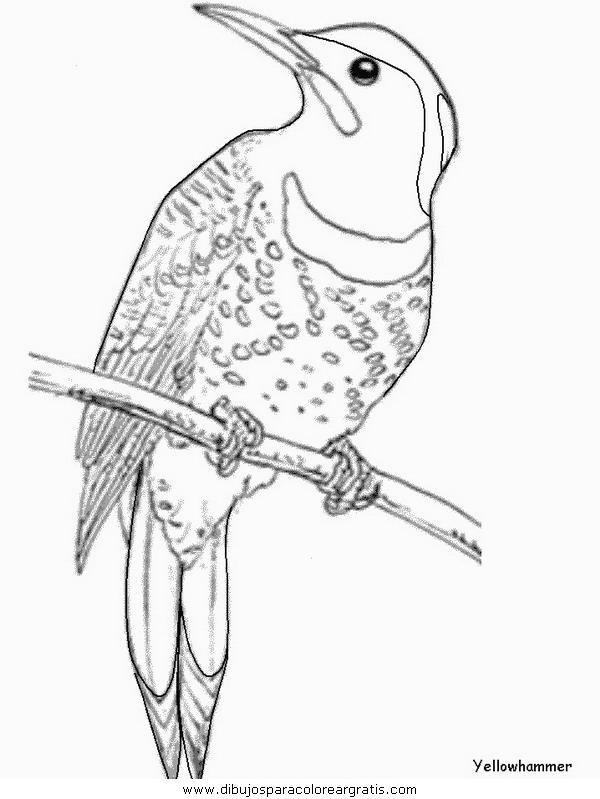 animales/pajaros/yellowhammer.JPG