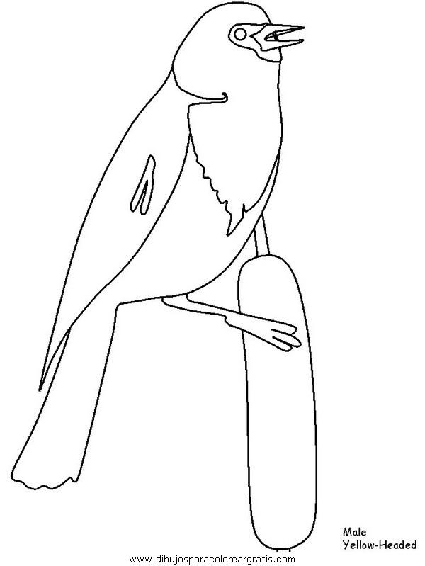 animales/pajaros/yellowheadedblackbird.JPG