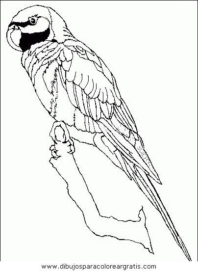 animales/papagayos/papagayos04.JPG