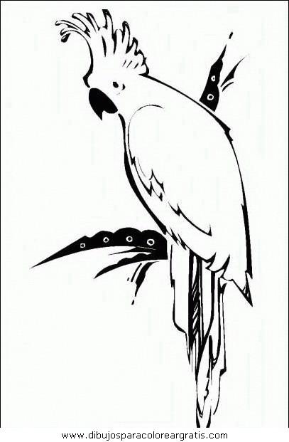 animales/papagayos/papagayos05.JPG
