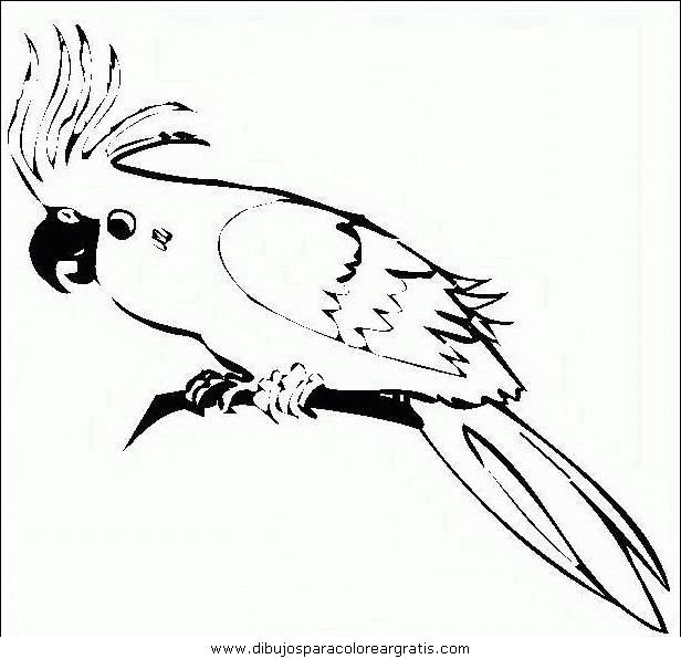animales/papagayos/papagayos07.JPG