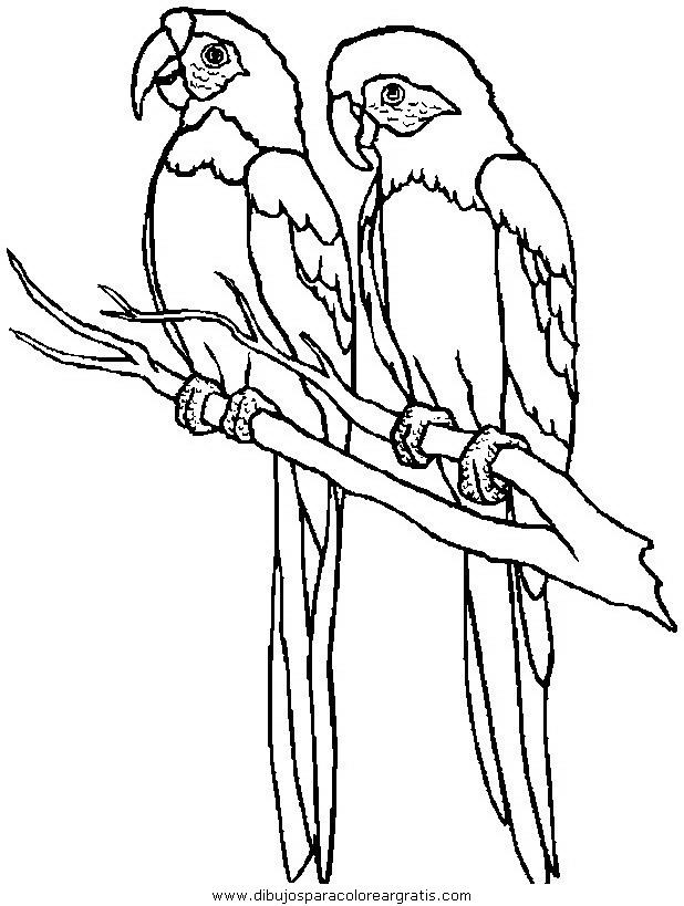 animales/papagayos/papagayos08.JPG