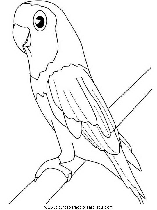 animales/papagayos/papagayos09.JPG