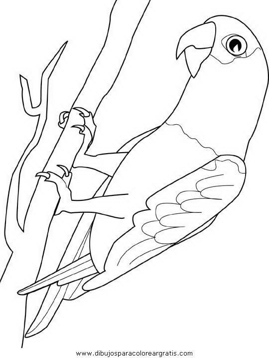 animales/papagayos/papagayos10.JPG