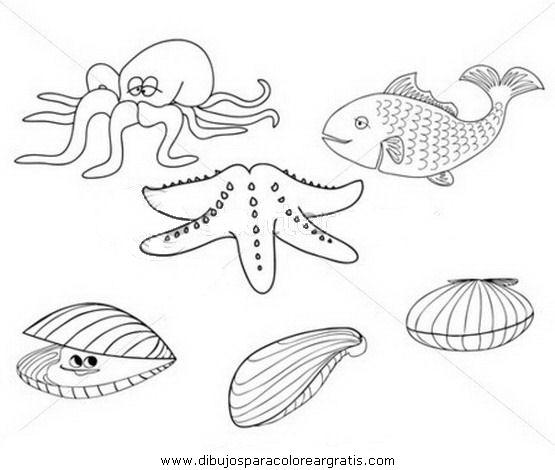 animales/peces/mejillone_4.JPG