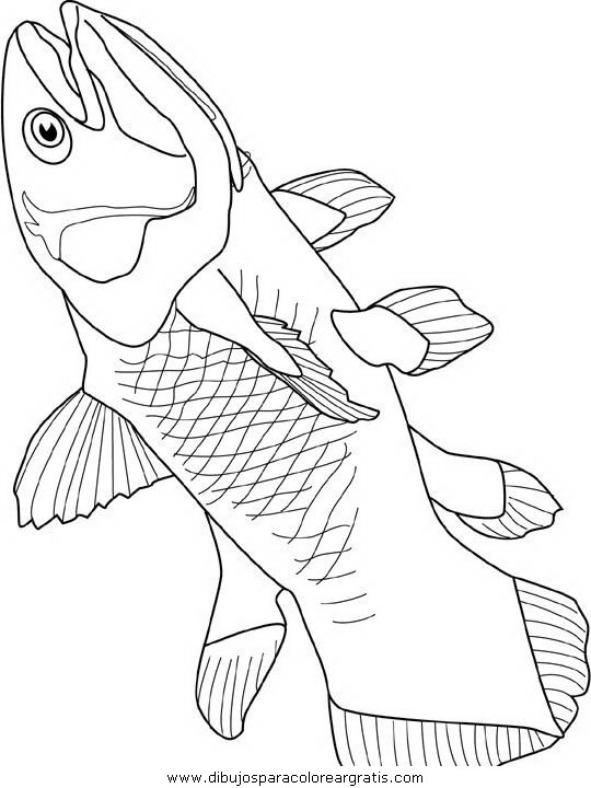 animales/peces/peces_012.JPG