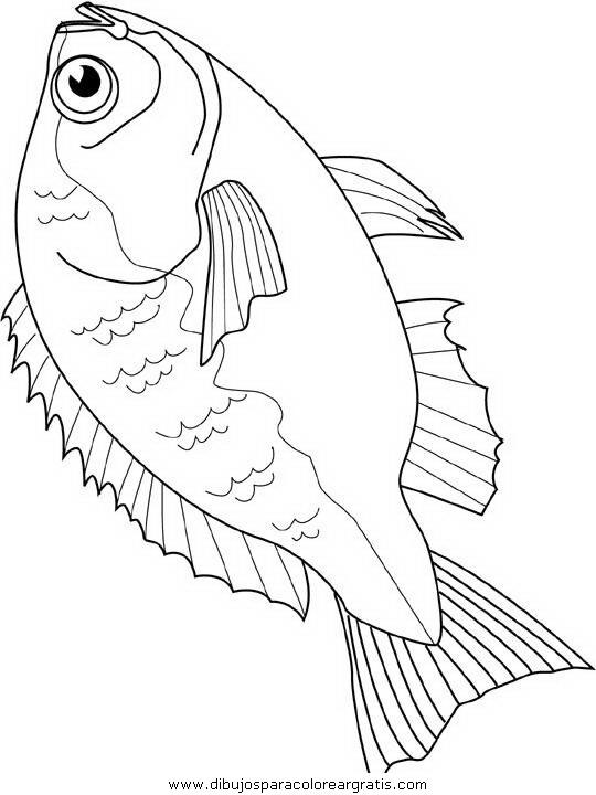 animales/peces/peces_018.JPG