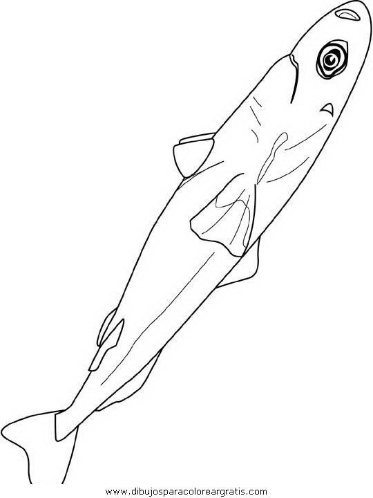 animales/peces/peces_036.JPG