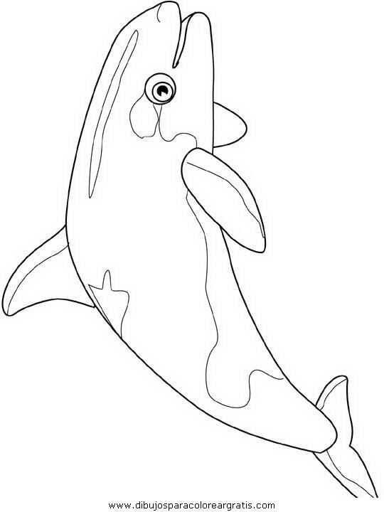 animales/peces/peces_042.JPG
