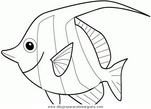 animales/peces/peces_066.JPG
