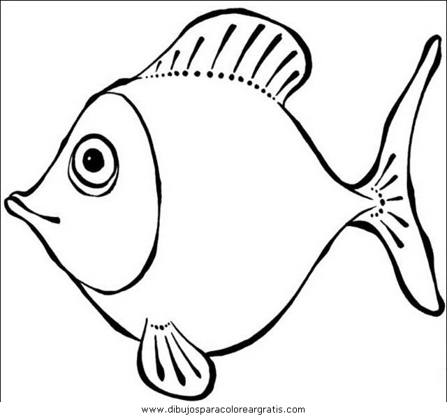 animales/peces/peces_090.JPG