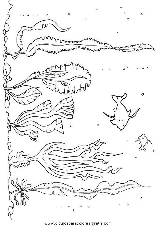 animales/peces/peces_100.JPG