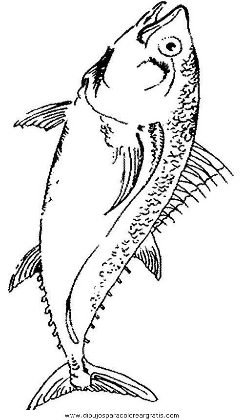 animales/peces/peces_114.JPG