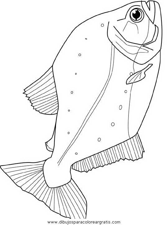animales/peces/peces_118.JPG