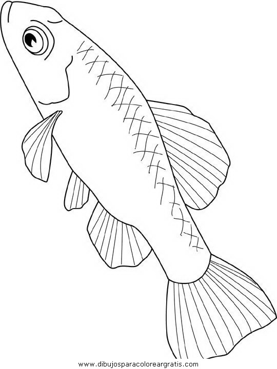 animales/peces/peces_128.JPG