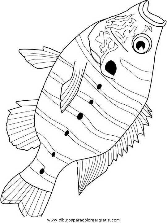animales/peces/peces_143.JPG