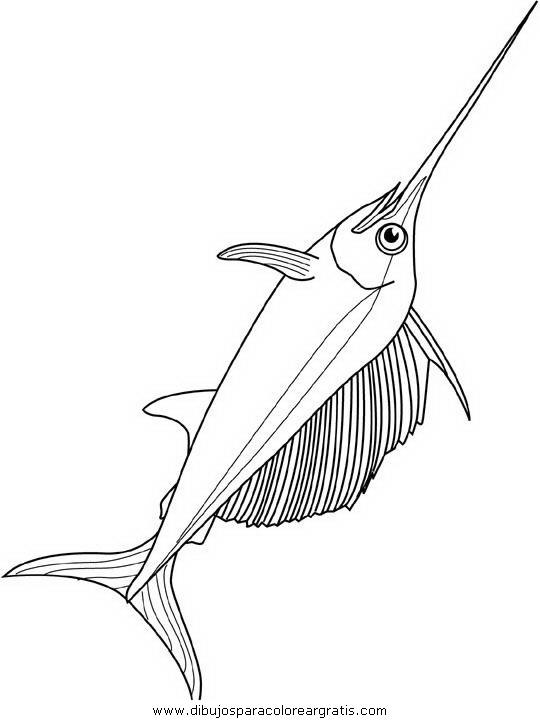 animales/peces/peces_144.JPG