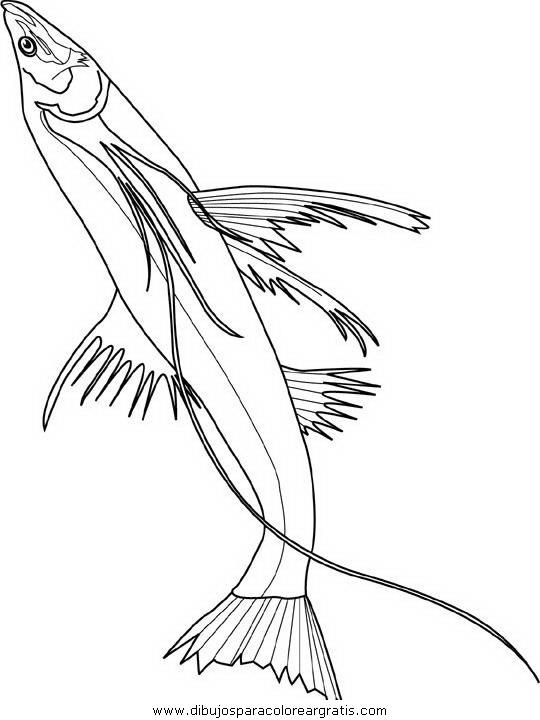 animales/peces/peces_146.JPG