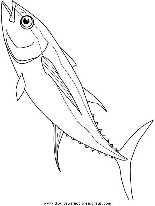animales/peces/peces_147.JPG