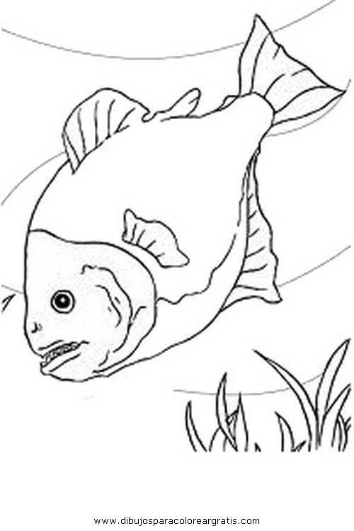 animales/peces/piranha.JPG