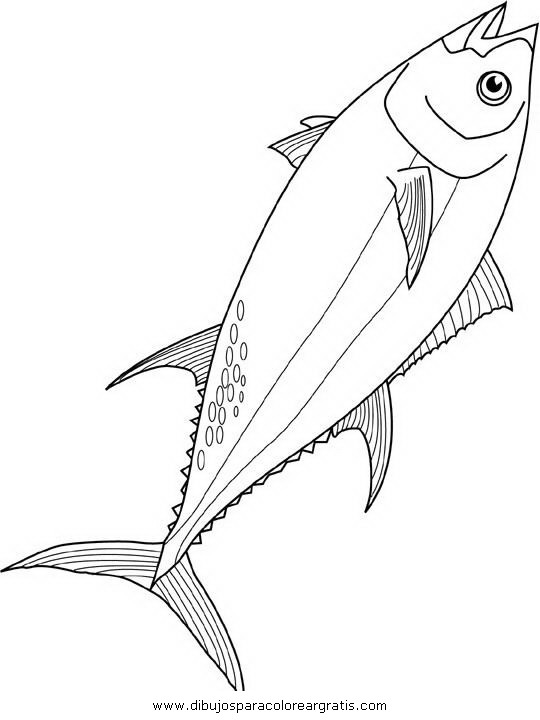 animales/peces/tuna_1.JPG
