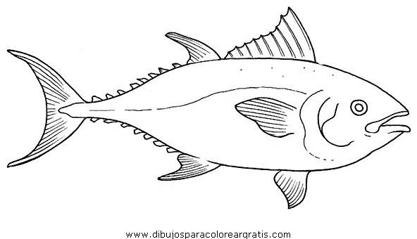 animales/peces/tuna_2.JPG