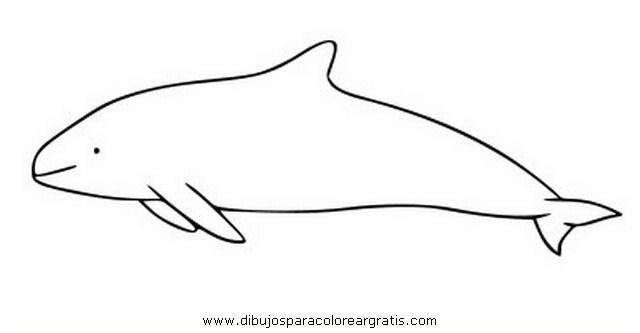 animales/peces/vaquita_2.JPG