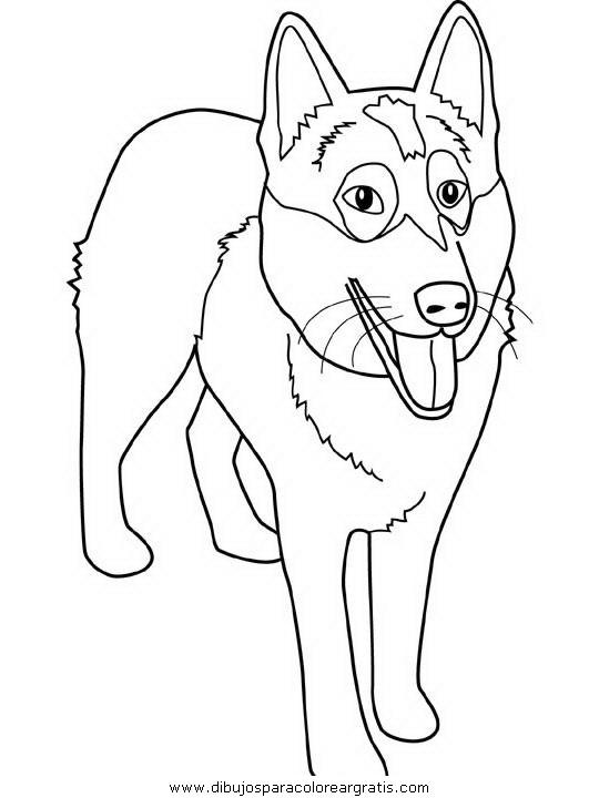 animales/perros/alaskan-malamute.JPG