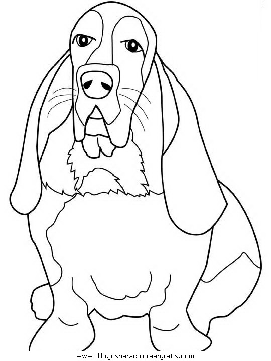 animales/perros/basset-hound.JPG