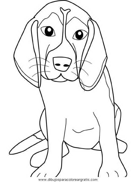 animales/perros/beagle.JPG