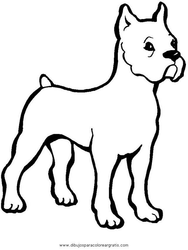 animales/perros/bulldog_boxer_1.JPG