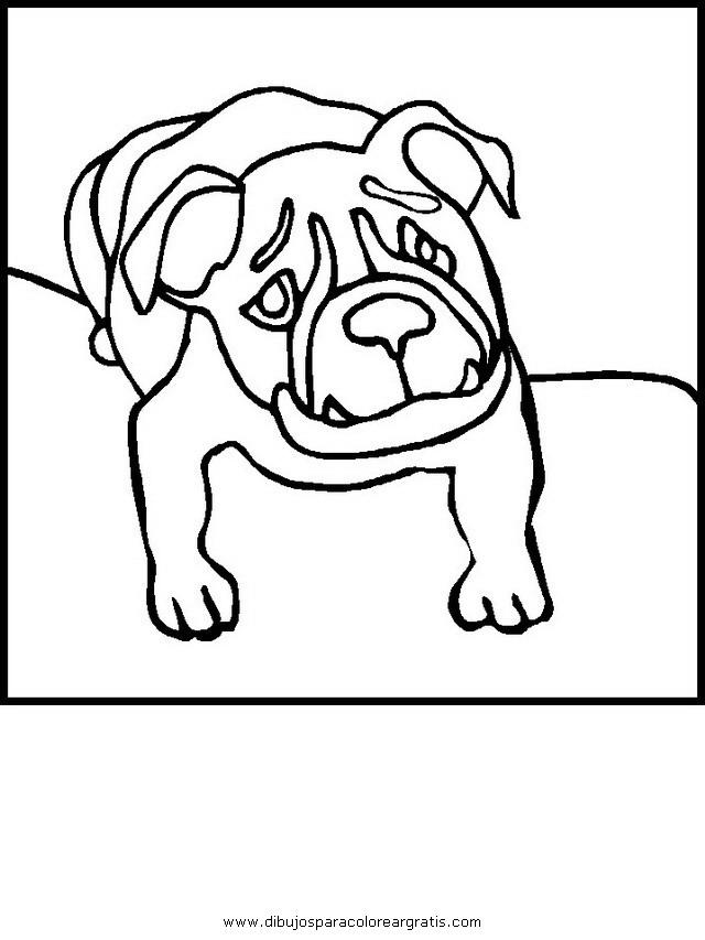 animales/perros/bulldog_boxer_2.JPG