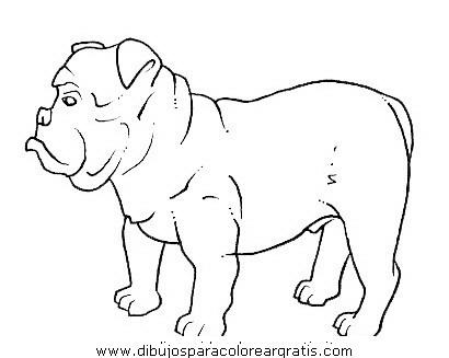 animales/perros/bulldog_boxer_6.JPG