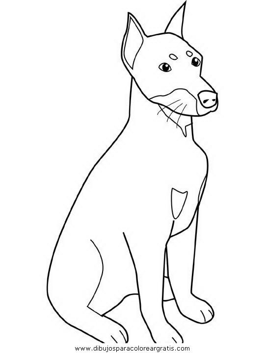 animales/perros/doberman.JPG