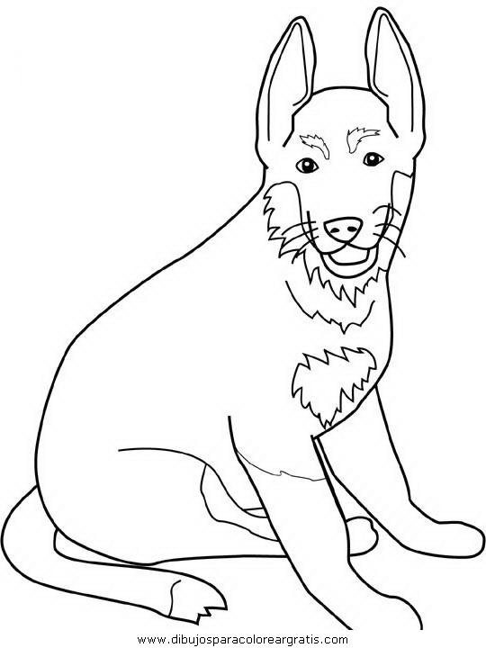 animales/perros/german-shepherd.JPG