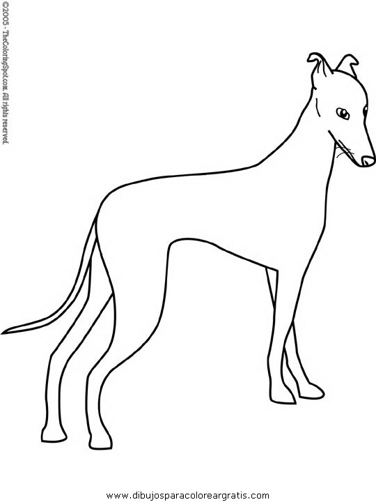 animales/perros/greyhound.JPG