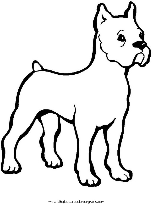 animales/perros/perros_013.JPG