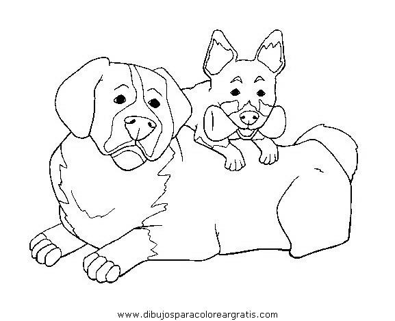 animales/perros/perros_031.JPG