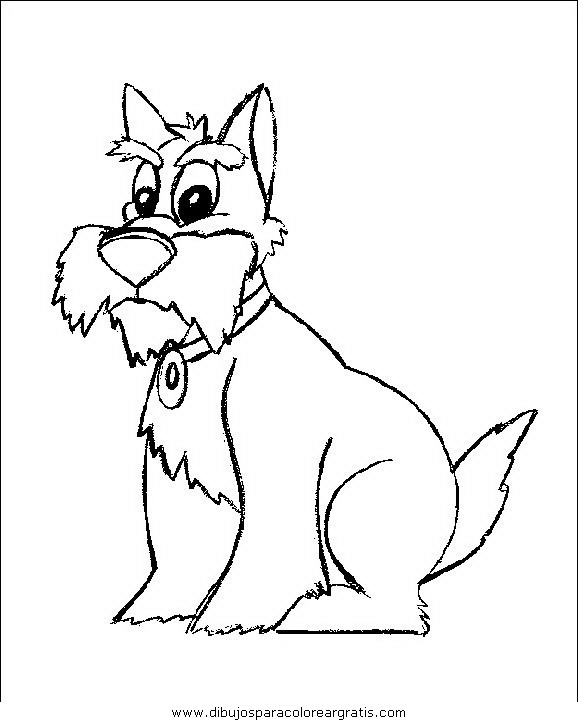 animales/perros/perros_066.JPG