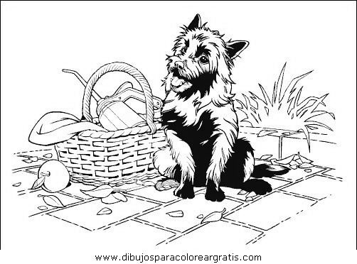 animales/perros/perros_072.JPG