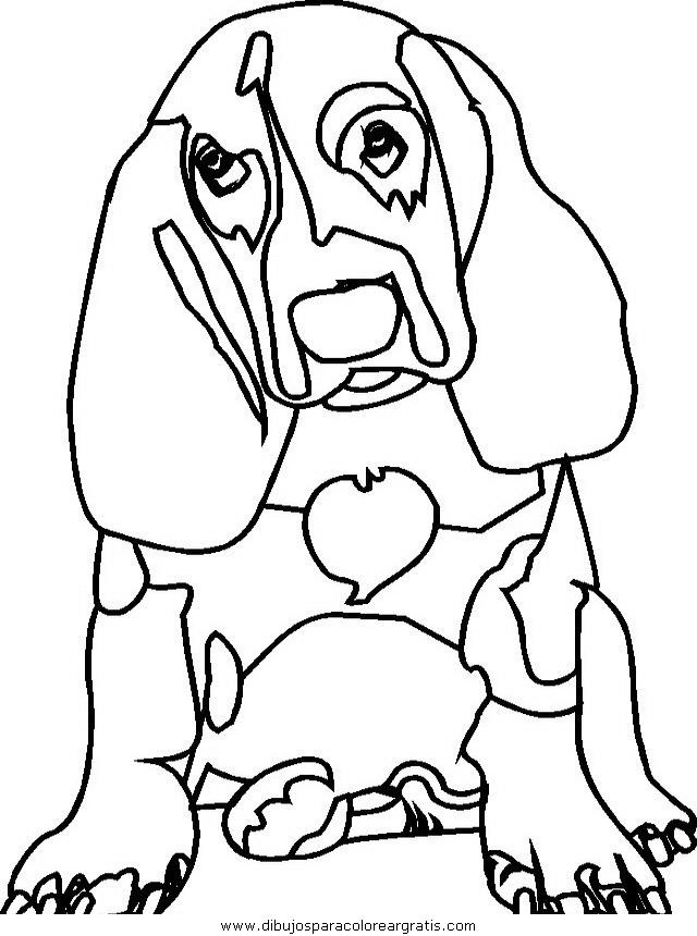 animales/perros/perros_078.JPG