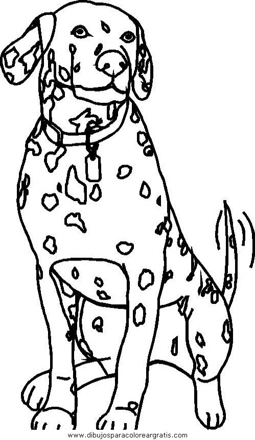 animales/perros/perros_080.JPG