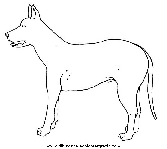 animales/perros/perros_087.JPG