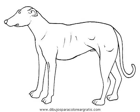 animales/perros/perros_088.JPG