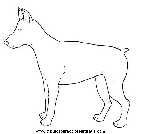 animales/perros/perros_089.JPG