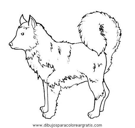 animales/perros/perros_090.JPG