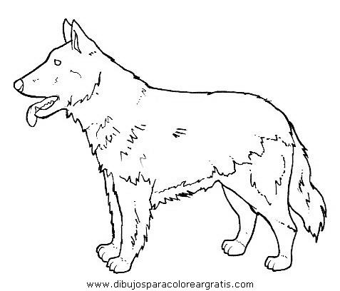 animales/perros/perros_091.JPG