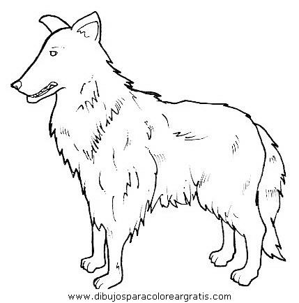 animales/perros/perros_092.JPG